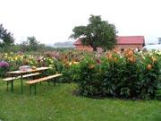 Jiřinkové dny 2007 (foto Luděk Brzák)